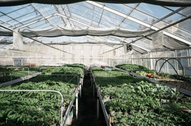 Jungpflanzenverkauf Prinz Charles